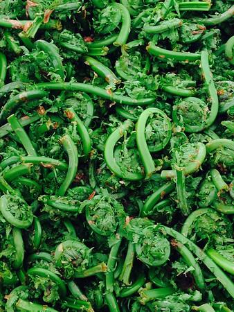 Fiddlehead Ferns_Peggy Kane_Food We Eat