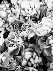 Mushrooms NYC Union Square_Pegggy Kane_FOod We Eat