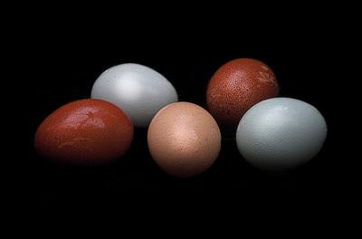 Fresh Eggs_Betsy Wilson_Food We Eat