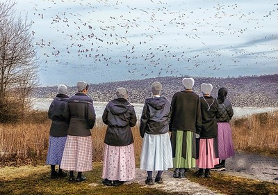 Watching the Snow Geese - Betsy Wilson
