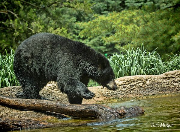 May Favorite_Teri Moyer_Bearly There