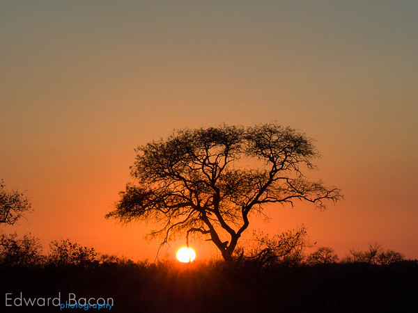 Kruger Sunrise -Ed Bacon