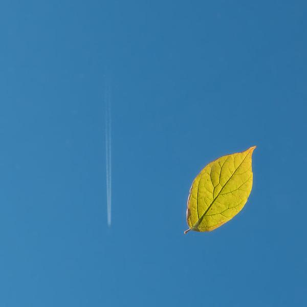 Leafin on a jet plane, Ed Bacon