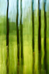 Arvid Bloom_Longwood Gardens Spring_Through the Trees