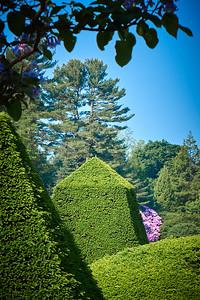 Arvid Bloom_Longwood Gardens Spring_Peek a Boo