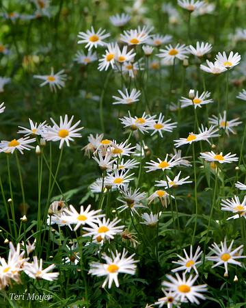 Longwood Gardens May_Teri Moyer_Happy Days