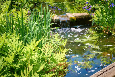 Arvid Bloom_Longwood Gardens Spring_Flowing