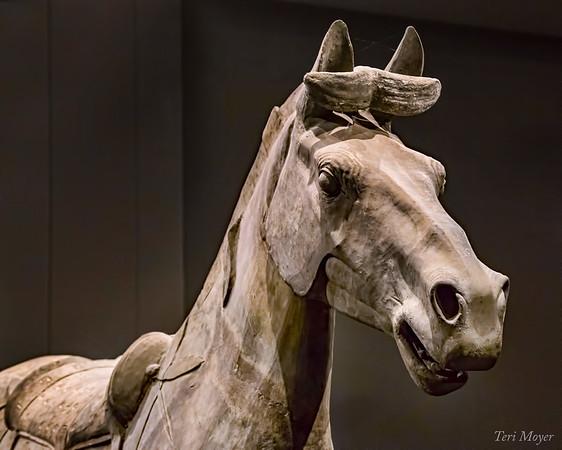 Teri Moyer_Franklin Inst_Warrior Horse