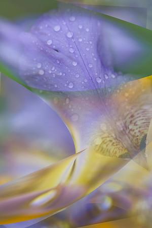 Iris Abstraction-Ed Bacon
