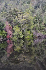 Gordon River reflections, TAS