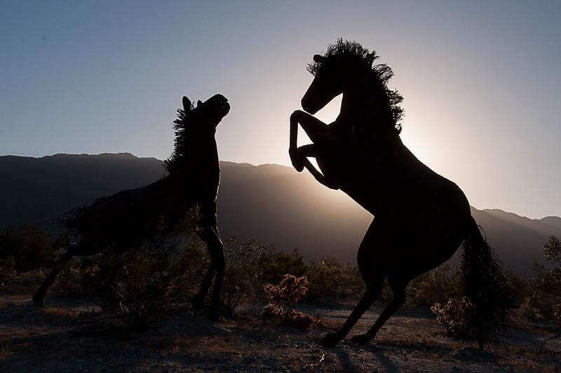 Galletas Meadows horses