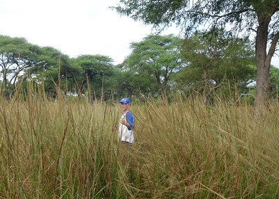 Walking back in the tall grass