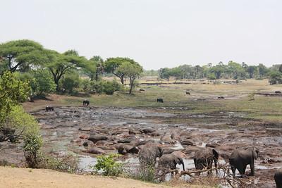 Hippo & Elephant Tool