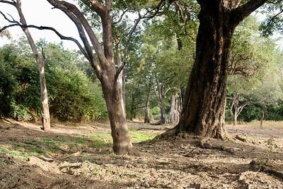 Mopani Woodland