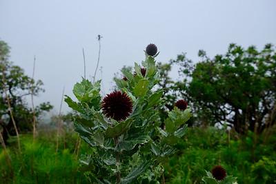 Nice high altitude flora