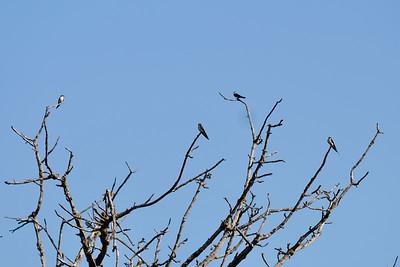 Prolific birdlife
