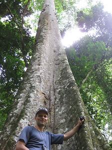 Posing with a mahogany tree