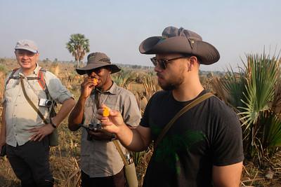 Tasting the Borassus Fruit