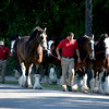 The Budweiser Clydesdales horses and their Dalmation arrived at Patriots Point April 24, 2015, for their visit to the Charleston area. (Photo/Ashley B. Heffernan)