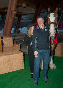 Clydesdale at the Mohegan Sun