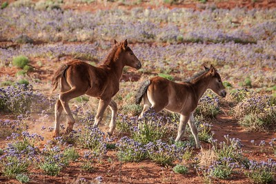 Born Free/Monument Valley