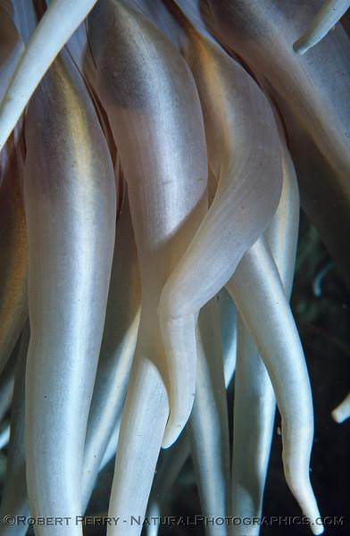 anemone legs log 1138 Bonaire