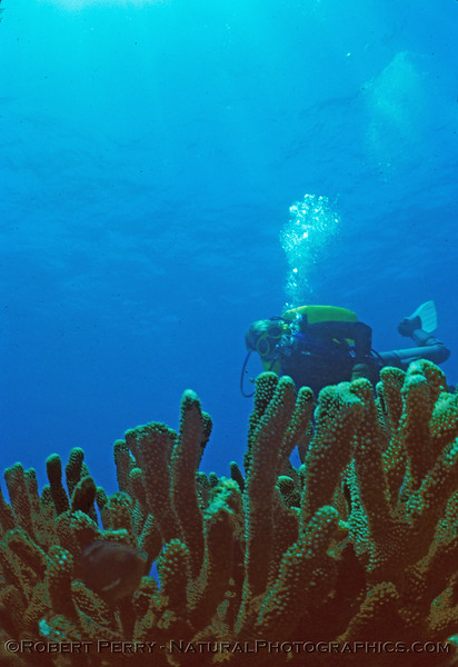 coral log 794 Kauai 1981-07