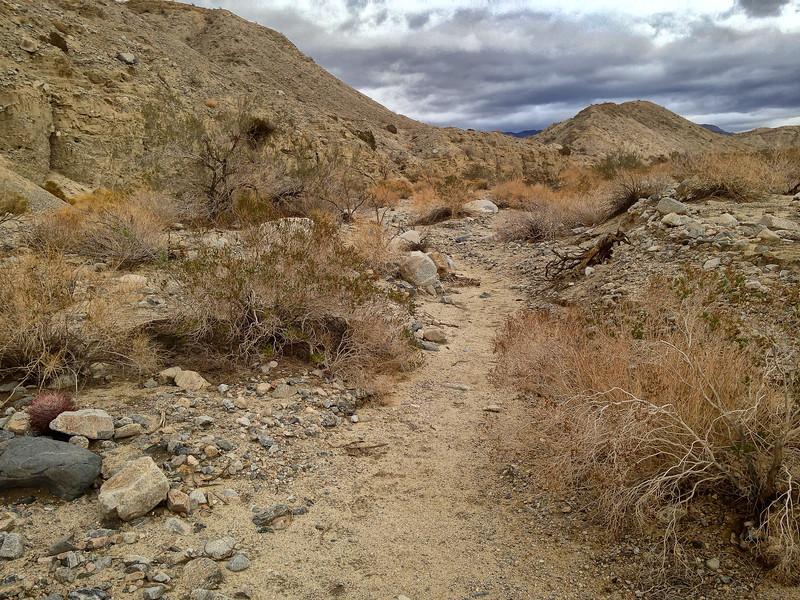 Coachella Valley Preserve, Pushawalla Palms, California