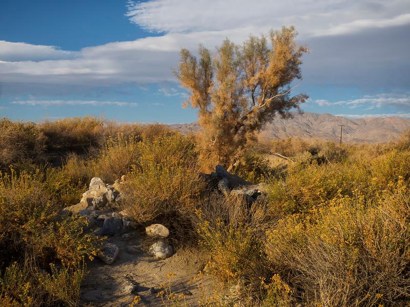 Coachella Valley Preserve, California