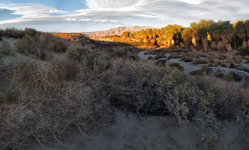 McCallum Grove, Coachella Valley Preserve, California