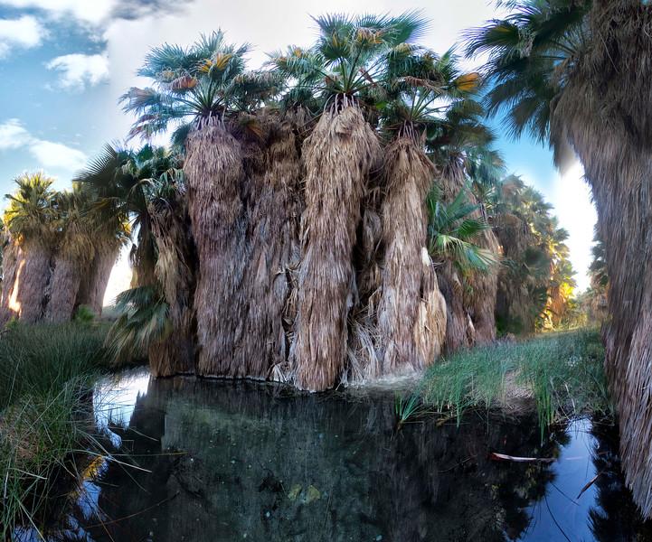McCallum Pond, Coachella Valley Preserve, California