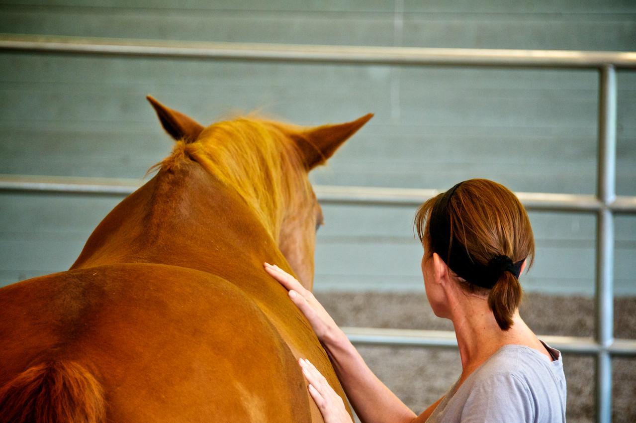 SLG coaching with horses