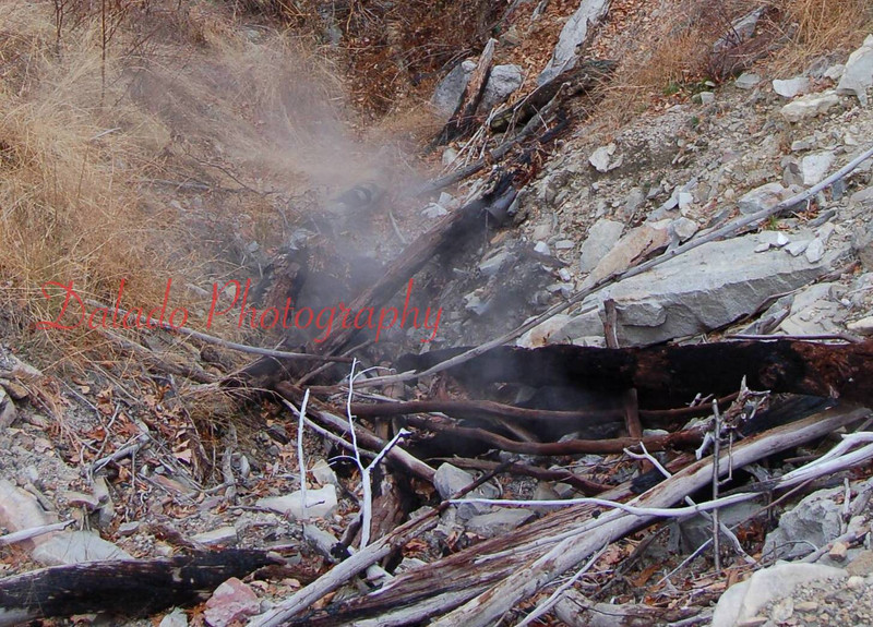 Charred wood at the Coal Run/Glen Burn Mine Fire.