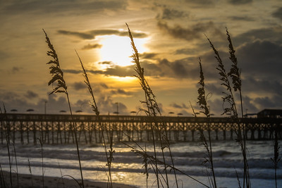 Sea Oat Sunrise