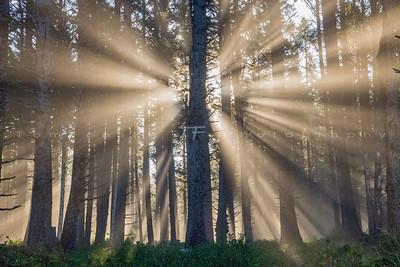 Sunbeams through Coastal Fog