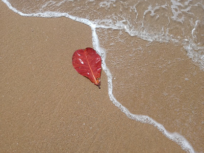 Beach Leaf Litter