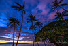 Tropical Twilight