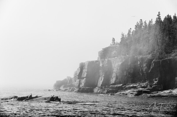 Foggy Otter Point