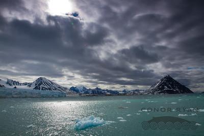 arctic palette
