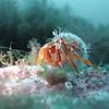 Hermit Crab at Dusk