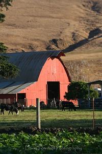 Red barn near San Simeon.