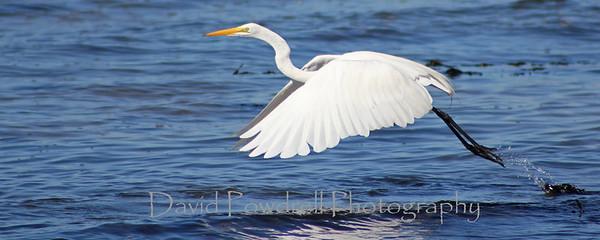 Coastal Birds of California