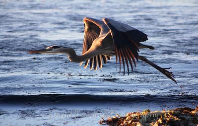 Beach birds 12