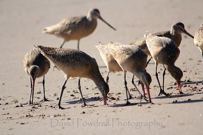 Beach birds at JBowl-Between Sets