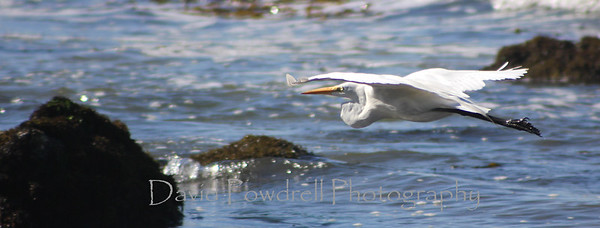 1 Heron leaving