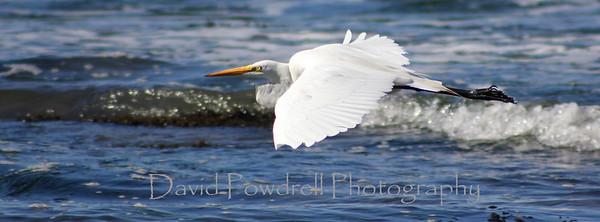 1 Heron in glide