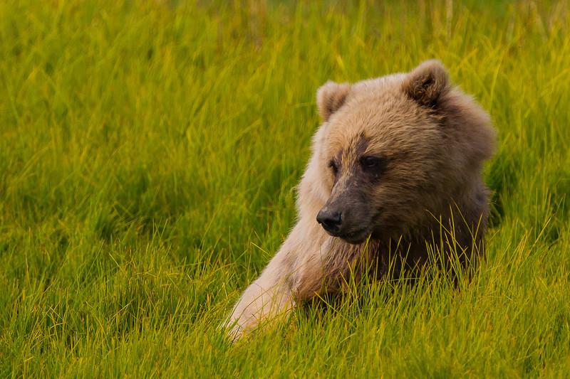contemplative cub