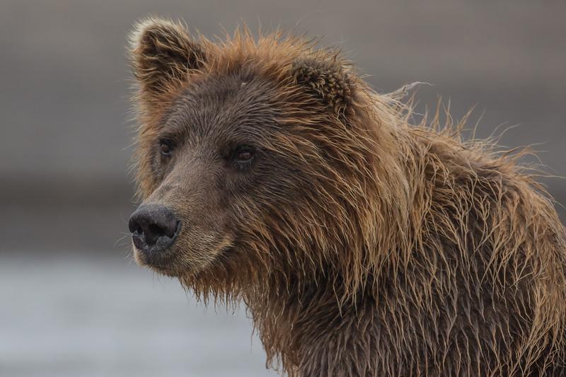 Mother Bear ~ close up