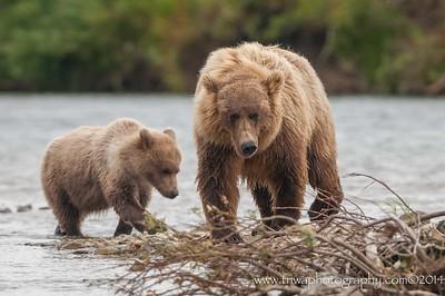 Sow & Cub Katmai National Park & Preserve Alaska © 2015