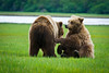 Living in the Here & Now<br /> Coastal brown bears at play<br /> Katmai National Park & Preserve, Alaska<br /> © 2011
